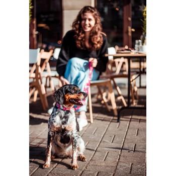 April w kolekcji COOKIE MONSTER marki Dobry Pies