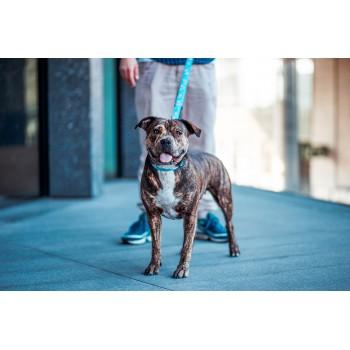 Joga w kolekcji ŁOTR&MELON marki Dobry Pies